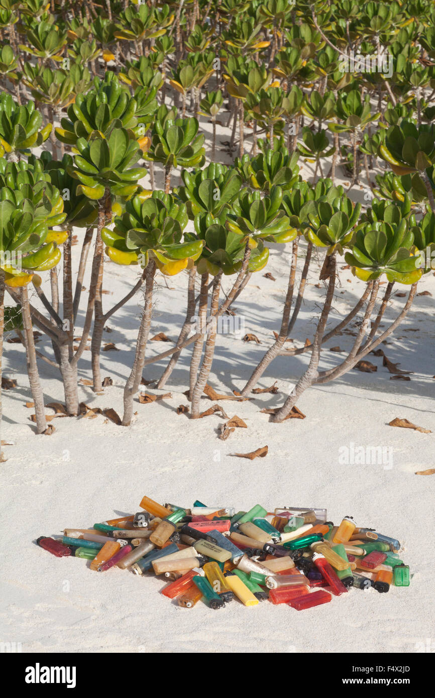 Los encendedores de cigarrillos en la playa contigua Naupaka arbusto, recogidos después del lavado en tierra en la isla del Pacífico para la eliminación para evitar daños a la fauna marina Foto de stock