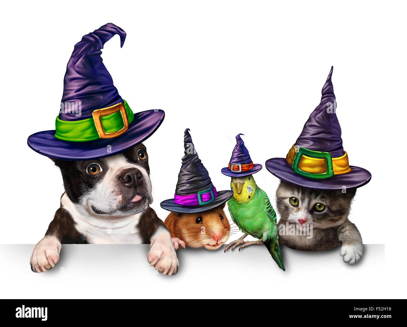 Halloween Pet firmar en blanco con un divertido gato feliz perro lindo hámster y budgie cada vistiendo un sombrero Imagen De Stock