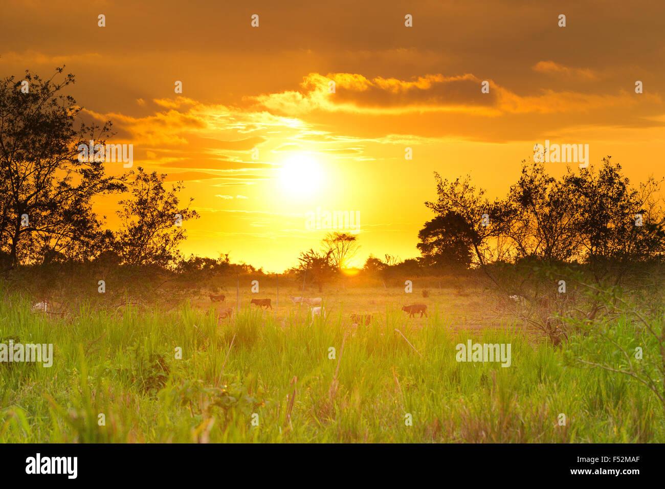 Atardecer en la provincia de Esmeralda, en el norte de Ecuador Imagen De Stock