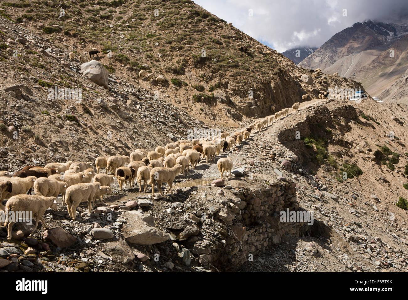 India, Himachal Pradesh, Spiti, Chandra Taal, rebaño de ovejas y cabras bloqueando Kunzum La circunvalación Imagen De Stock