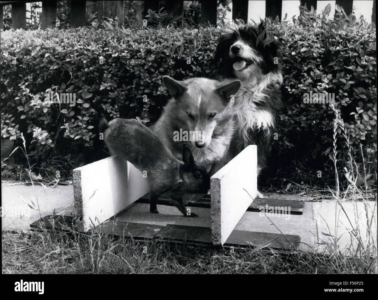 1962 - Corre conejo!! ''Pero siento correr hacia abajo'', dice Maryanne el conejo. ''Lo que realmente necesita.'' comienza a Buster el Corgie Doggo-Vite ''.'' concluye Jess. Todo esto se lleva a cabo en la Sra. Olive Tate's back yard en Bexleuheath. © Fotos Keystone USA/ZUMAPRESS.com/Alamy Live News Foto de stock