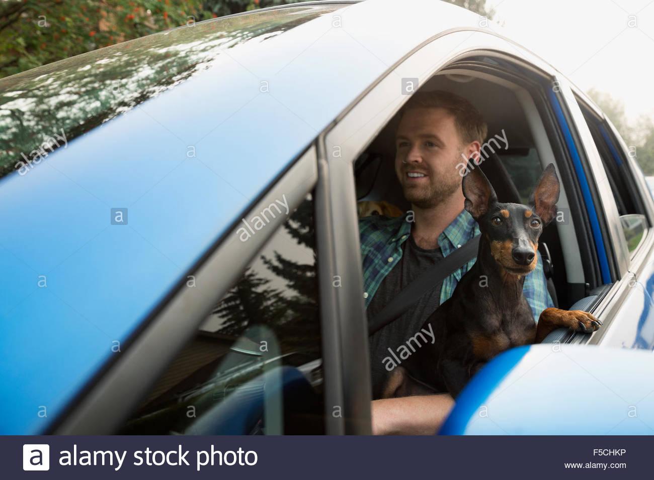 Hombre que conducía el coche con el perro lap ventana inclinada Imagen De Stock