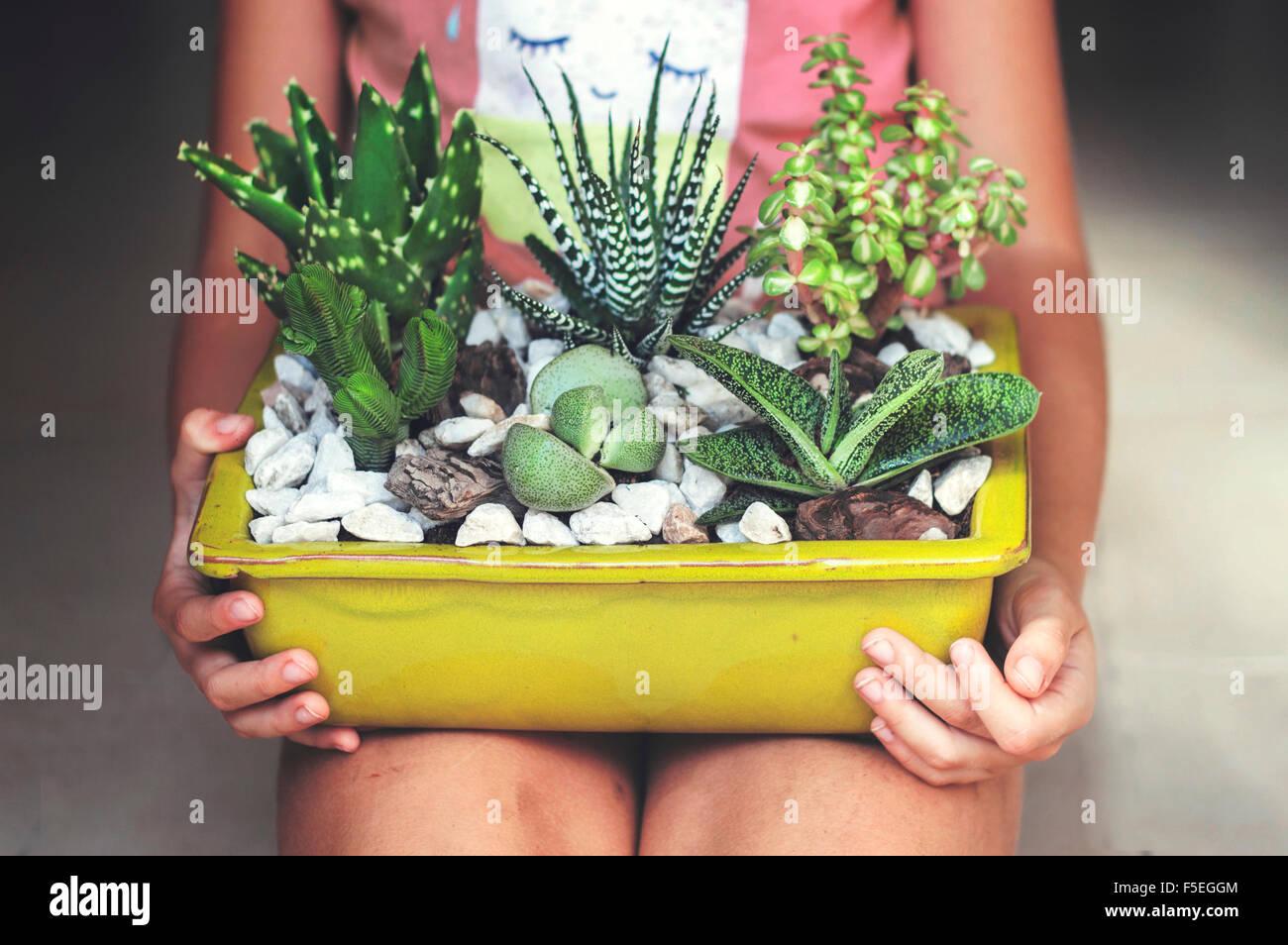 Chica sentada, sosteniendo una pantalla de plantas suculentas Imagen De Stock