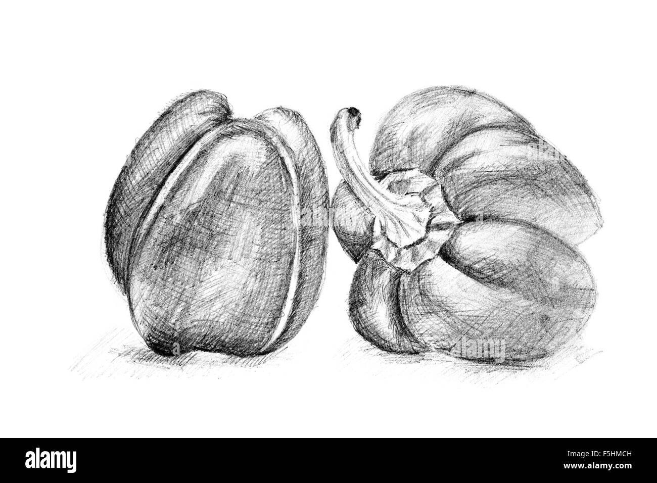 Dibujo A Lapiz De La Pimienta O Pimenton En El Libro Blanco