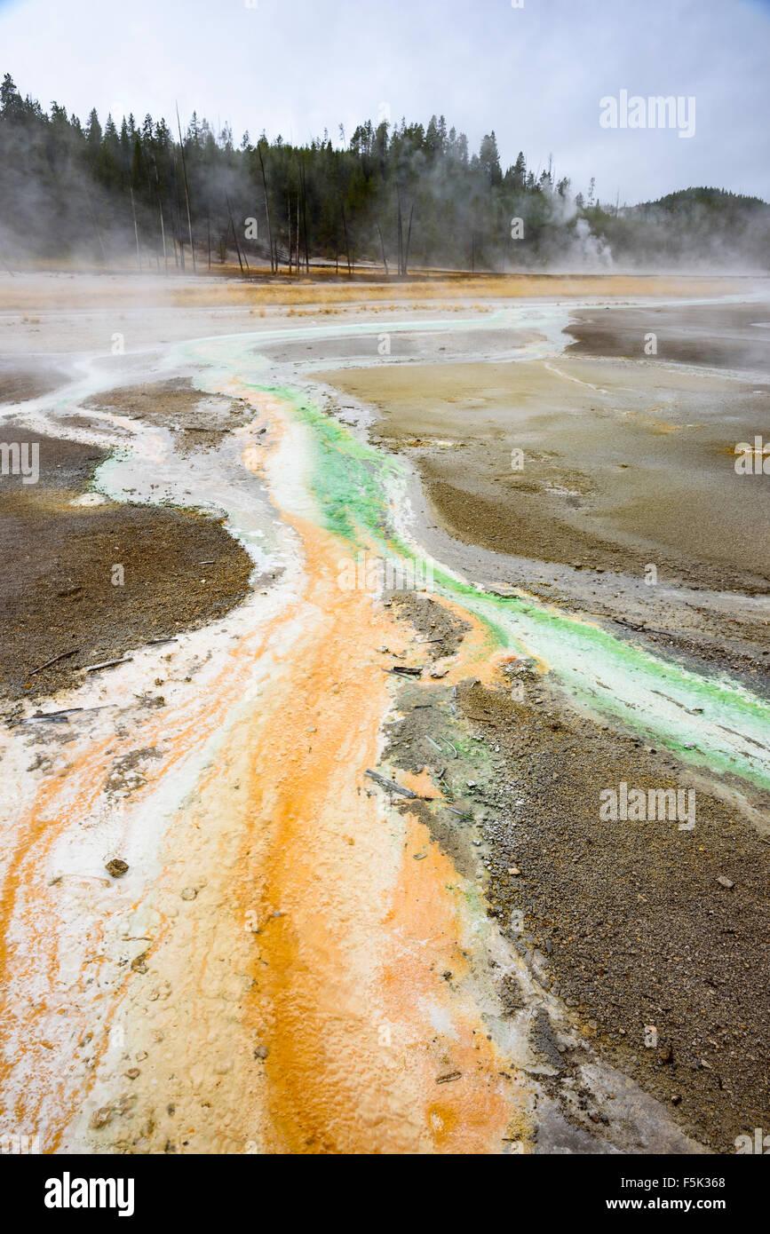 Colorido Thermophile escorrentía causada por bacterias de torbellino géiser, Norris Géiser Cuenca, Parque Nacional Foto de stock