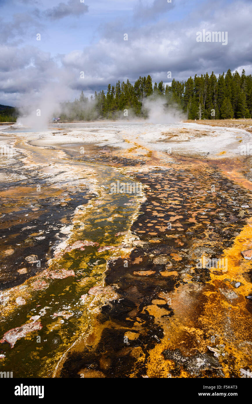 Colorido el escurrimiento de la espléndida, Comet y Daisy géiseres, la Cuenca del Géiser Superior, el Parque Nacional Foto de stock