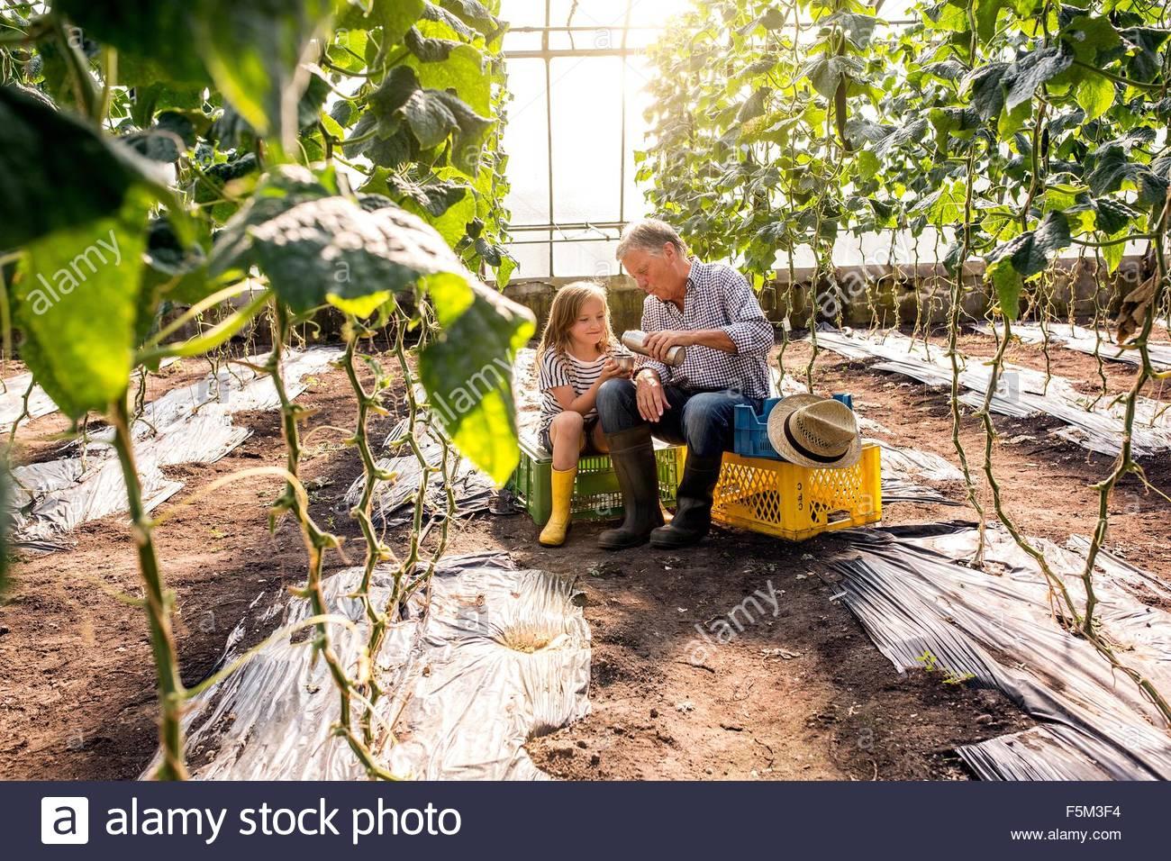 Abuelo y nieta en invernadero sentados en cajones de matraz vertiendo Imagen De Stock