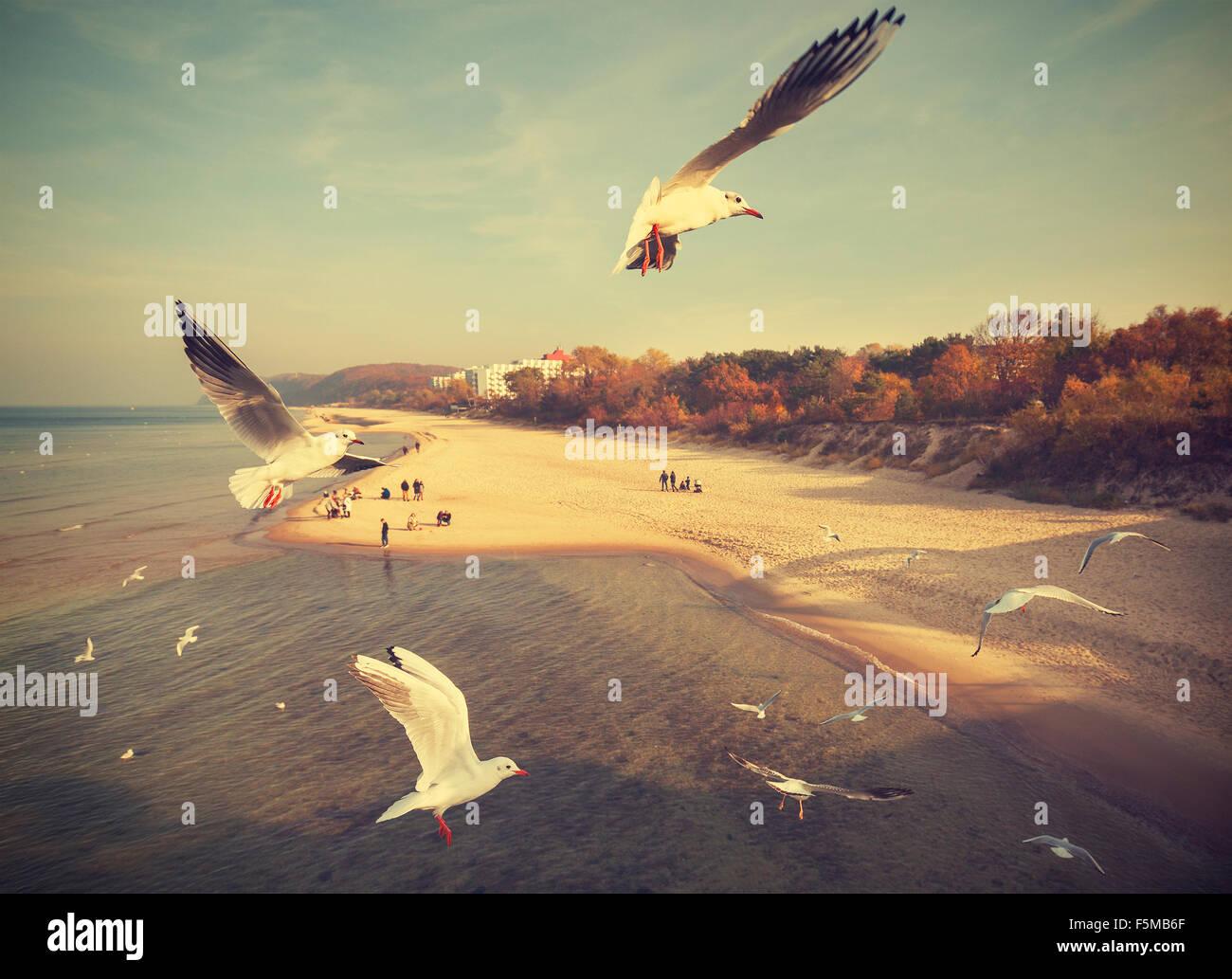 Vintage Retro aves estilizadas por encima de la playa, del mar Báltico, Polonia. Imagen De Stock