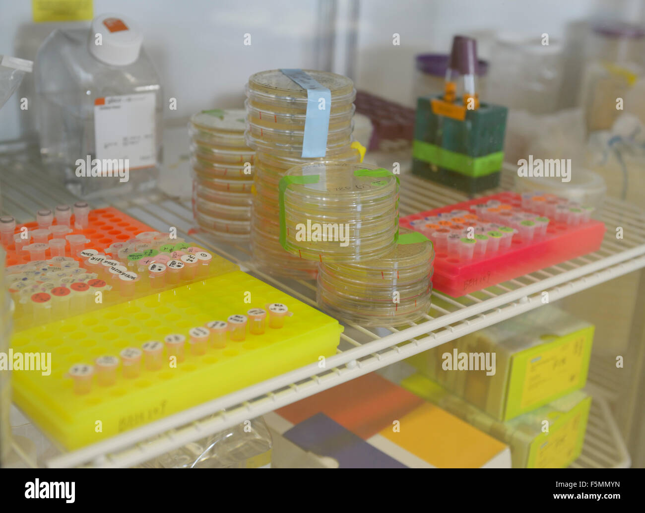 Placas de Petri y otros biiological las muestras en un refrigerador de un laboratorio de biotecnología Imagen De Stock