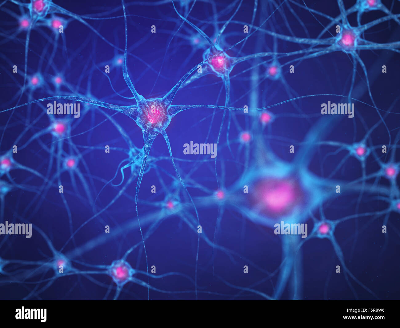 Red neuronal , las células cerebrales , el sistema nervioso humano Imagen De Stock