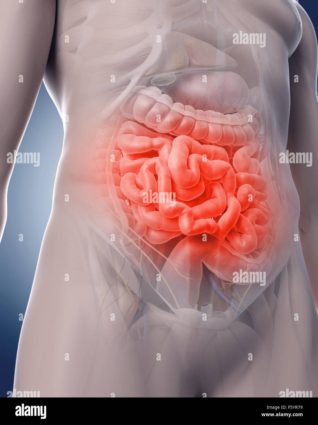 Ilustración 3d médicos de un doloroso intestino Imagen De Stock