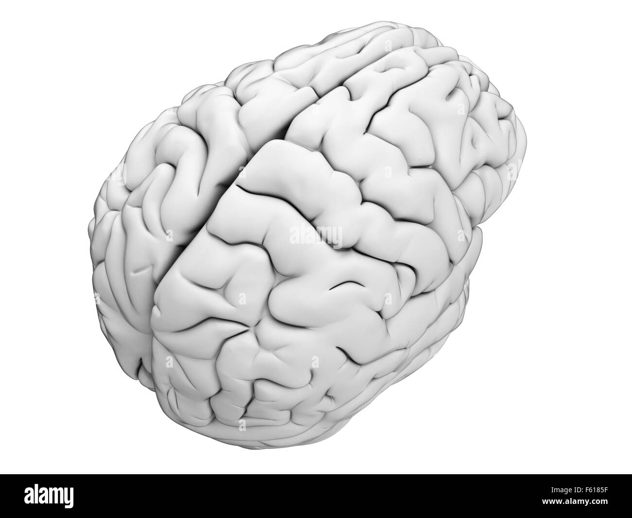 Ilustración médica precisa del cerebro humano Foto de stock