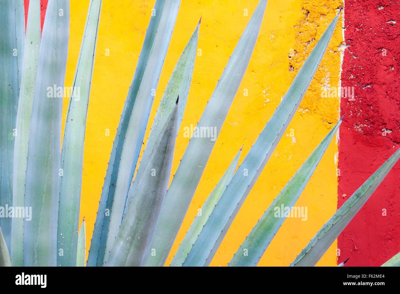Cactus de henequén (agave fourcroydes) y colorido muro en Yucatán, México. Imagen De Stock