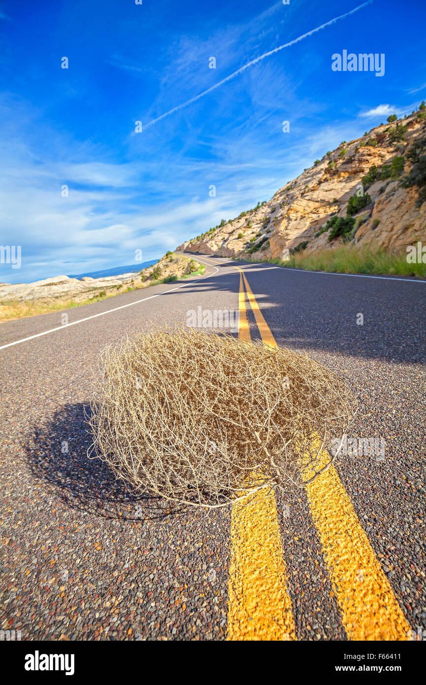 Tumbleweed en una carretera vacía, viajes concepto imagen, profundidad de campo, EE.UU.. Imagen De Stock