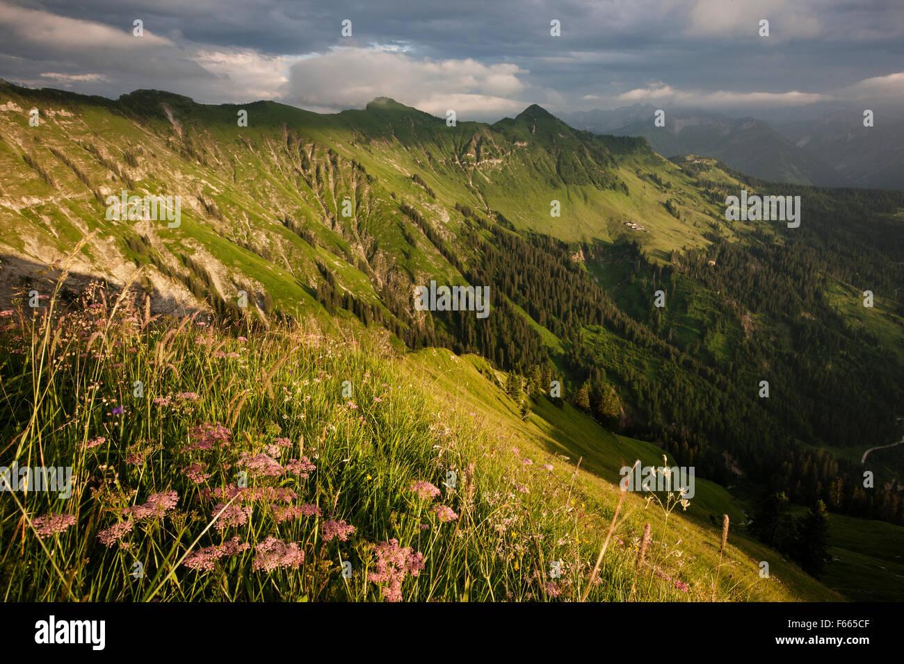 Las praderas alpinas en verano, Karwendel, tormentosa atmósfera, Tirol, Austria Imagen De Stock