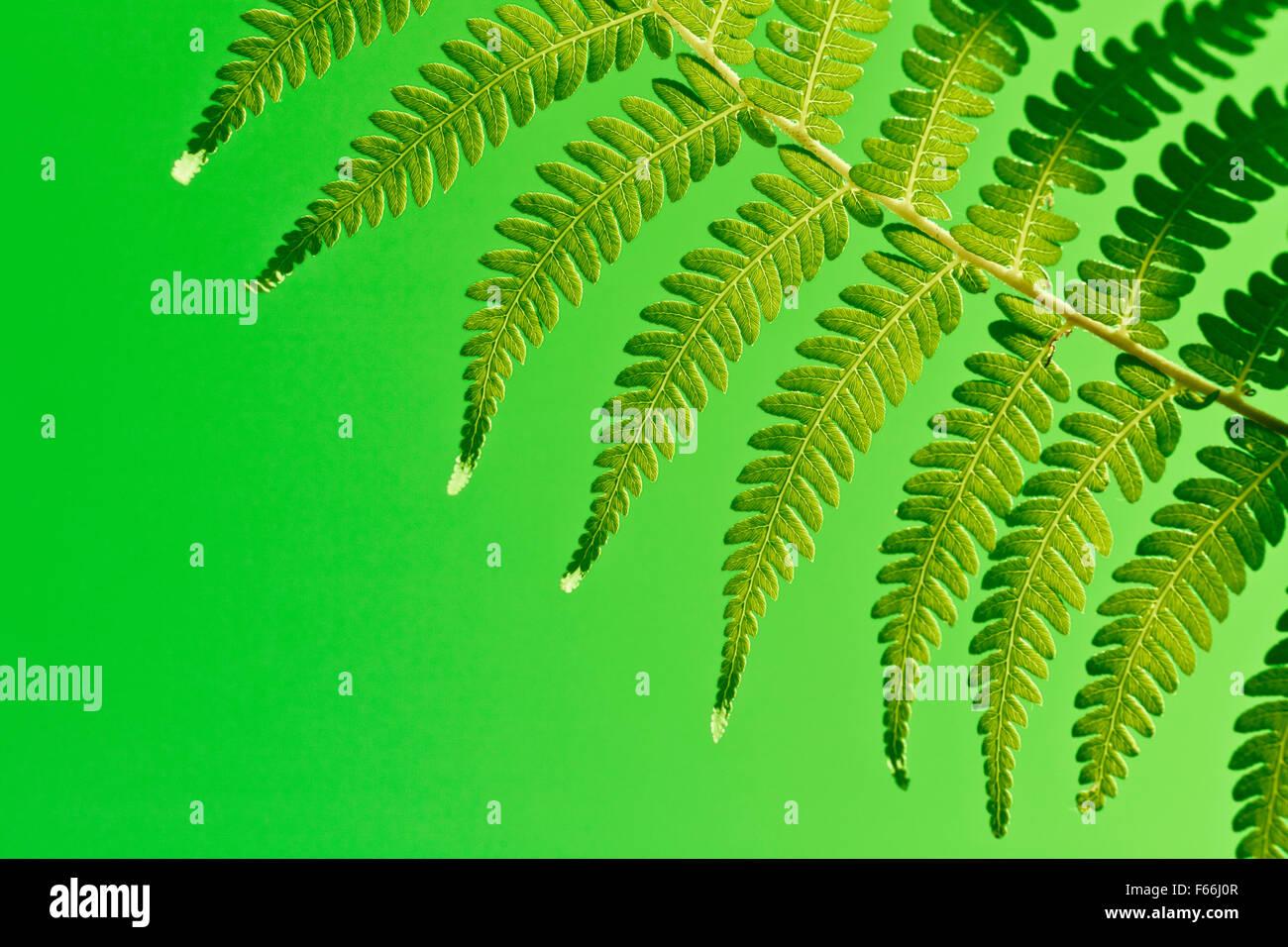Verde fresco fondos de helecho de Nueva Zelanda Imagen De Stock