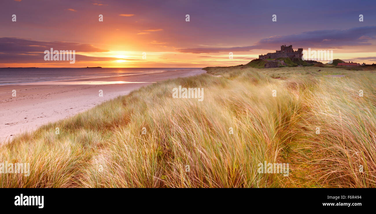 Amanecer sobre las dunas en Bamburgh, Northumberland, Inglaterra con la Bamburgh Castle en el fondo. Imagen De Stock