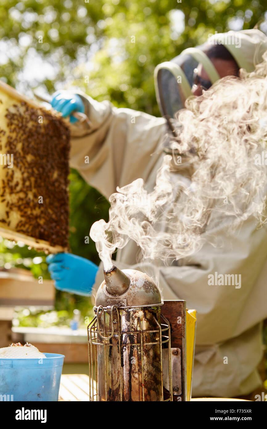 Un apicultor en un traje de apicultura con un fumador, la apertura y la verificación de sus colmenas. Imagen De Stock