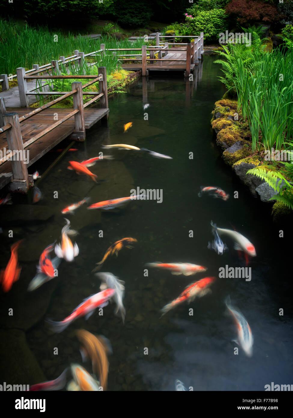 Koi y camas iris trazado. Jardines Japoneses, Oregón Imagen De Stock