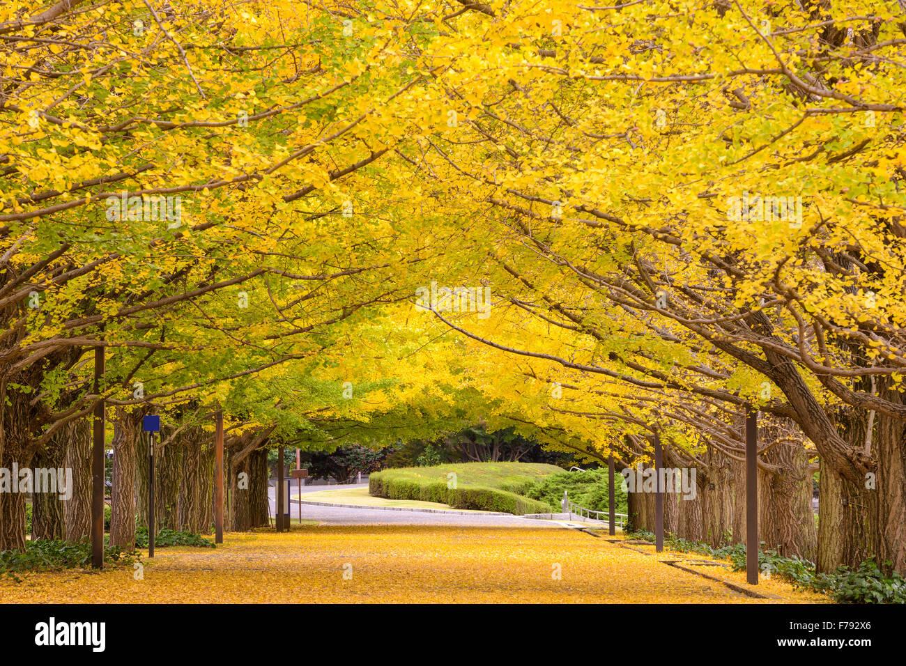 Parque de otoño en Tokio, Japón. Foto de stock