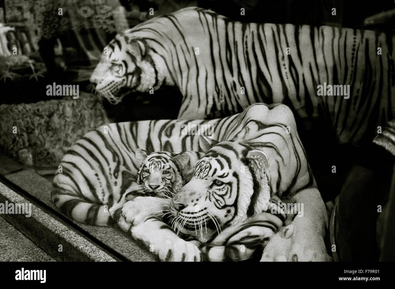 Los tigres en Bangkok Sukhumvit, en Tailandia en el lejano oriente, el sudeste de Asia. tiger wildlife naturaleza Imagen De Stock