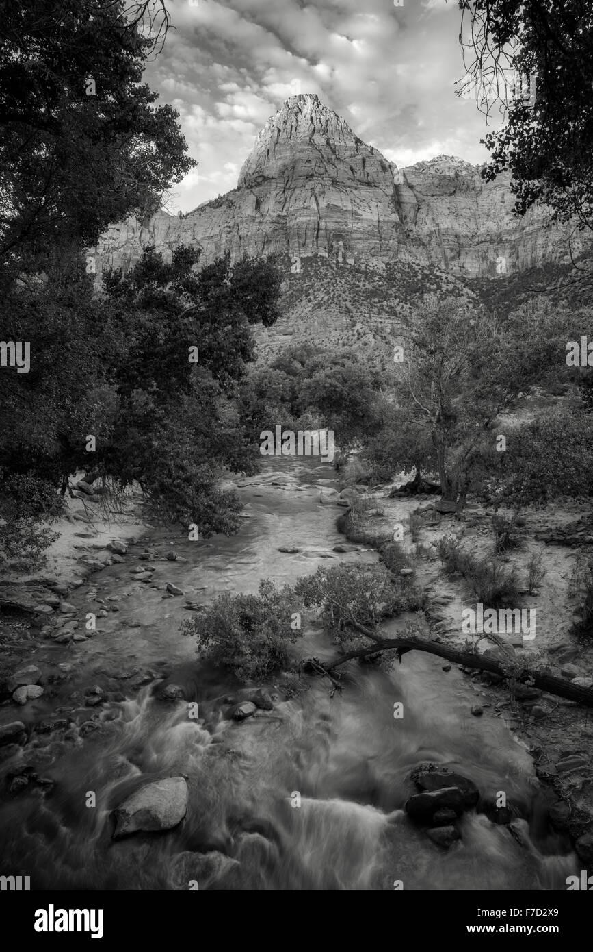 Virgin River y pico con árboles de chopo. El Parque Nacional Zion, UT Imagen De Stock