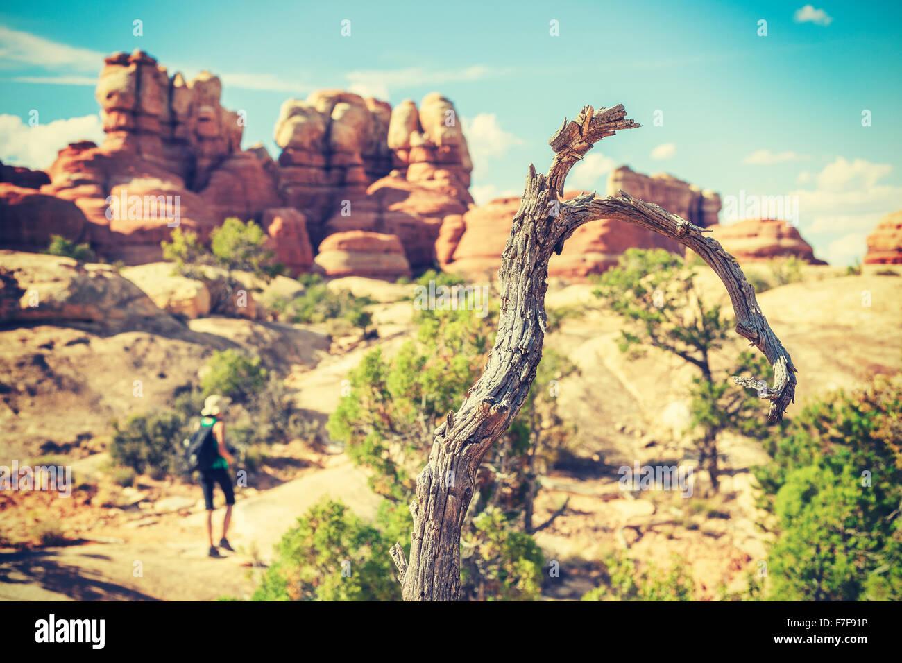 Vieja película estilizado árbol seco por el sendero de trekking, poca profundidad de campo. Imagen De Stock