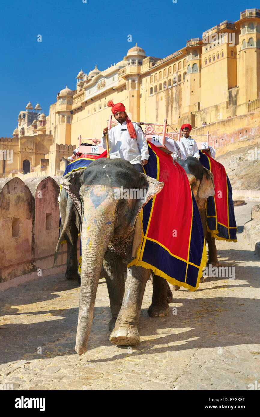 La India elefante (Elephas maximus) regresando del Fuerte Amber en Jaipur, Rajasthan, India Imagen De Stock