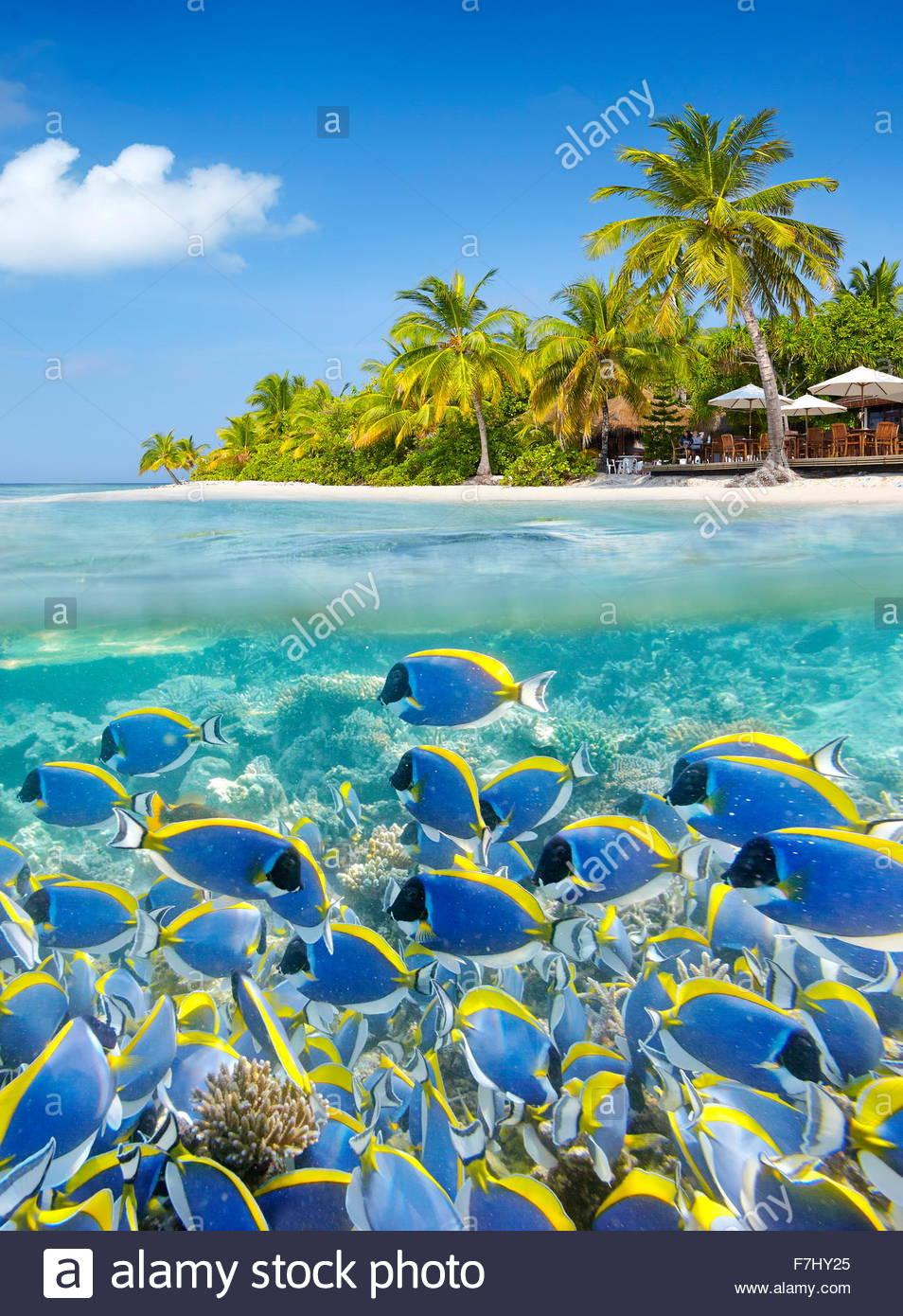 El paisaje tropical en las Maldivas, el Atolón Ari Imagen De Stock