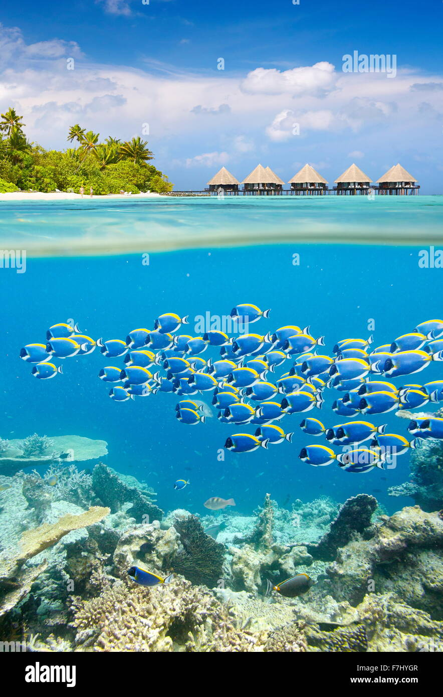 Maldivas - Isla tropical con vista submarina cardumen de peces Foto de stock