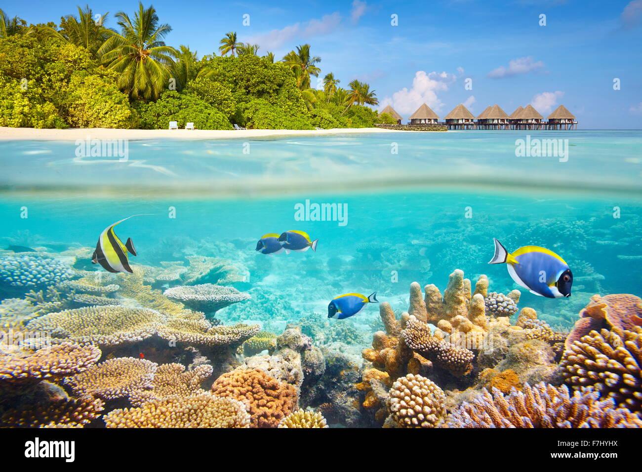 Vista submarina tropical con arrecifes y peces, las Maldivas Imagen De Stock
