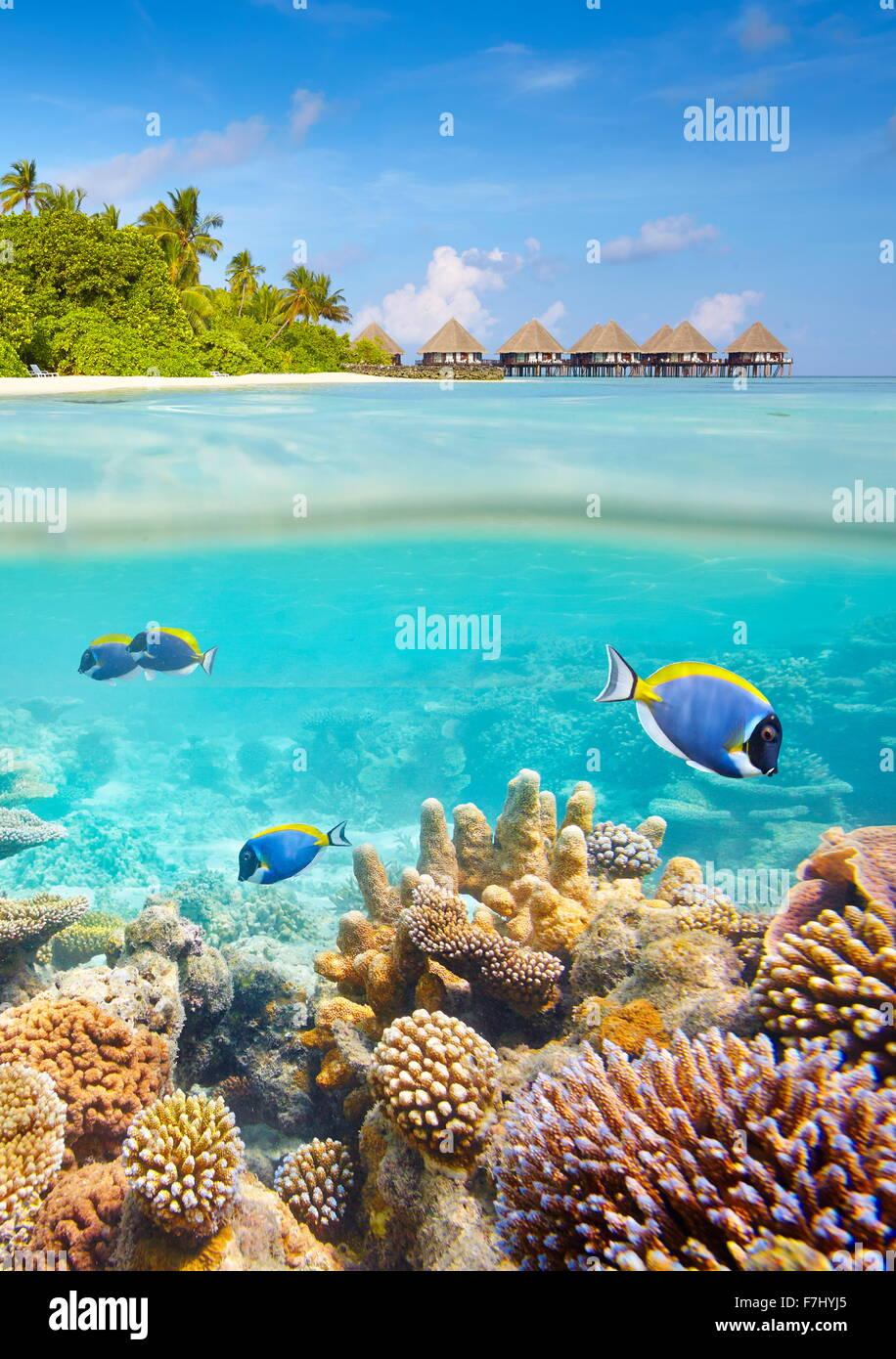 Vista submarina con coral y peces, Islas Maldivas Foto de stock