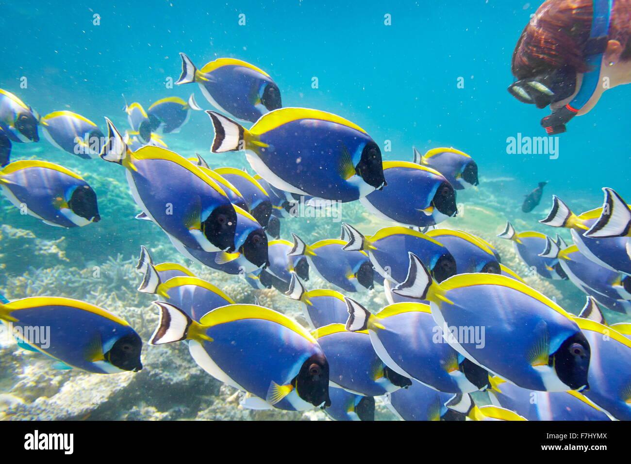 Paisaje subacuático tropical en las Maldivas, Océano Índico Foto de stock