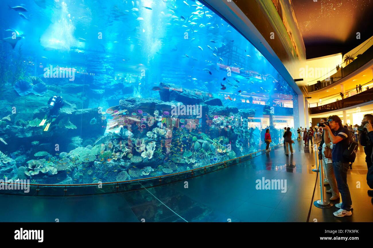 El acuario Dubai Mall, Dubai, Emiratos Árabes Unidos, Oriente Medio Imagen De Stock