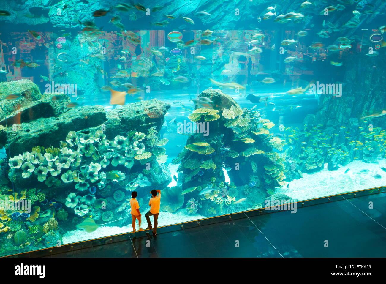 Niños mirando el acuario Dubai Mall, Dubai, Emiratos Árabes Unidos, Oriente Medio Imagen De Stock