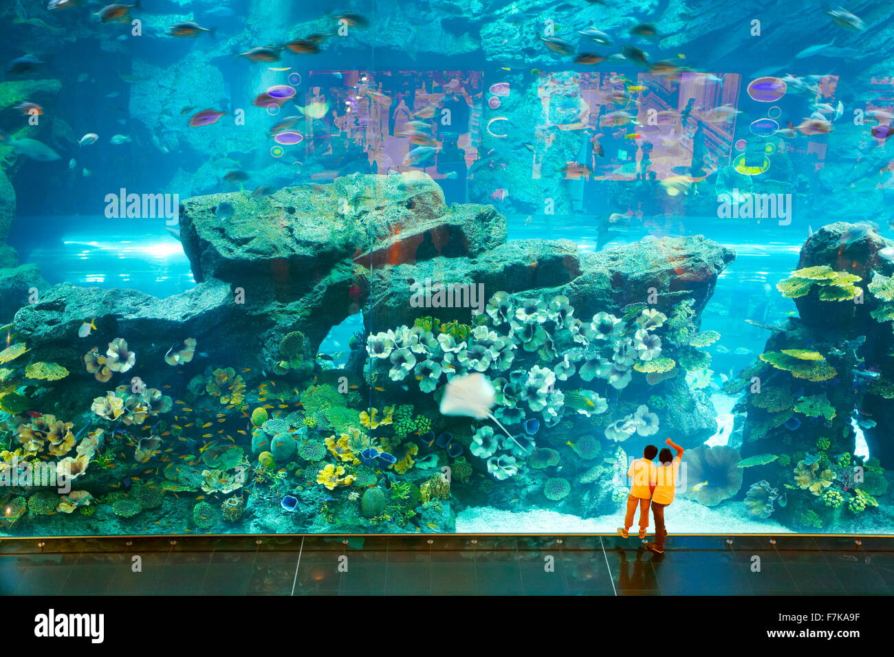 Niños mirando el mundo submarino en el acuario Dubai Mall, Dubai, Emiratos Árabes Unidos. Foto de stock