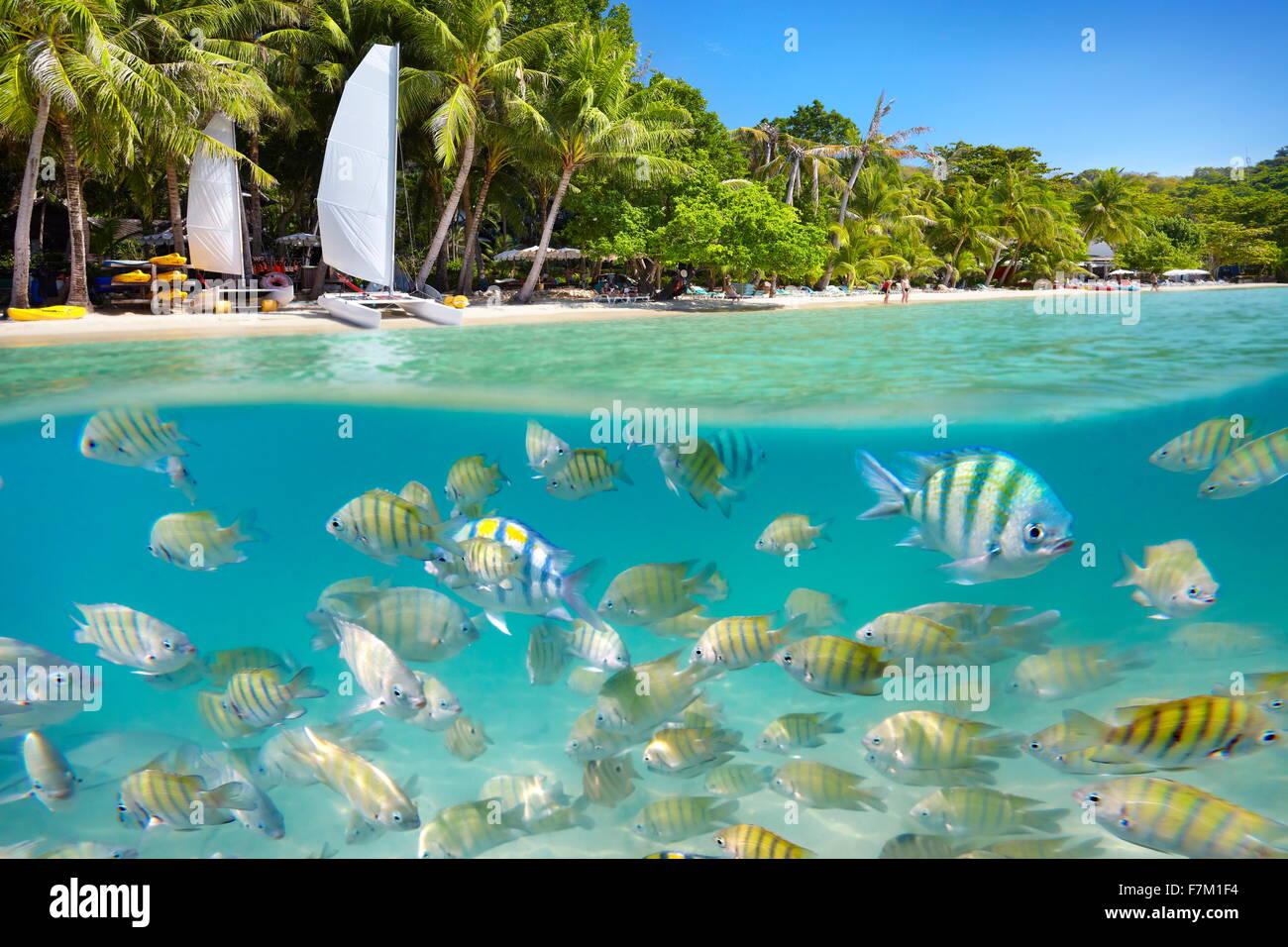 Tailandia - playa tropical y vista mar submarino con peces en Ko Samet Island, Tailandia, Asia Foto de stock