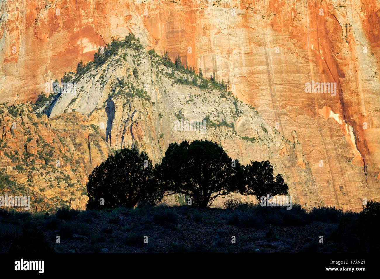Siluetas de árboles y templos y torres de la Virgen. Parque Nacional de Zion, Utah Imagen De Stock
