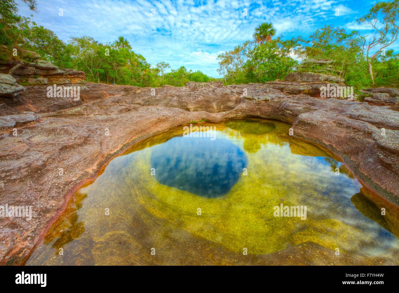 Colores en Caño Cristales, Colombia, plantas submarinas (Macarenia clarigera) endémico de arroyo y zona Imagen De Stock