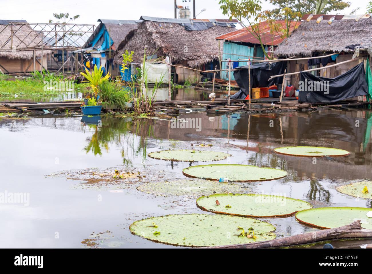 Victoria Amazonica, más grande del mundo hoja de lirio que crece en un barrio de tugurios en Iquitos, Perú Imagen De Stock