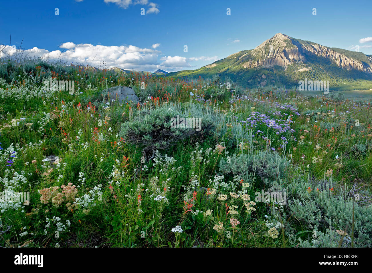 Flores silvestres y Mount Crested Butte (12,162 ft.), Crested Butte, en Colorado, EE.UU. Imagen De Stock