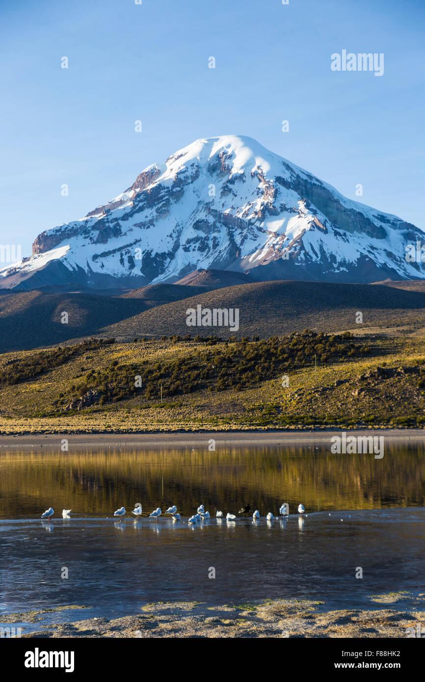 Lago y Volcán Sajama Huañacota, en el Parque Natural de Sajama. Bolivia Imagen De Stock