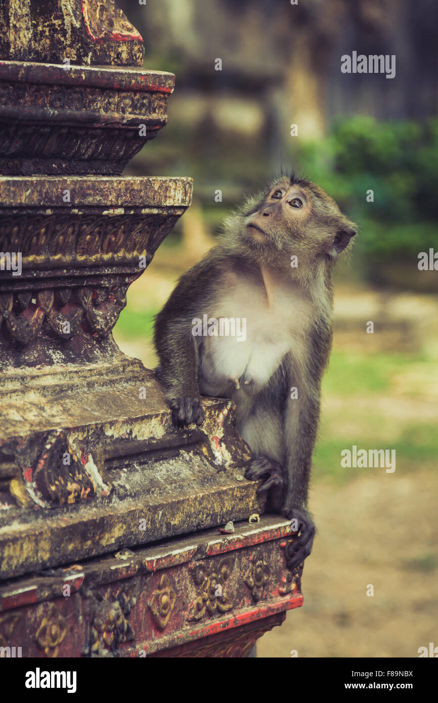 Mono en el templo de la Cueva del Tigre, Krabi, Tailandia Imagen De Stock