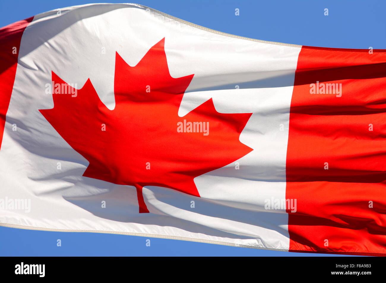 Bandera canadiense en el viento Imagen De Stock