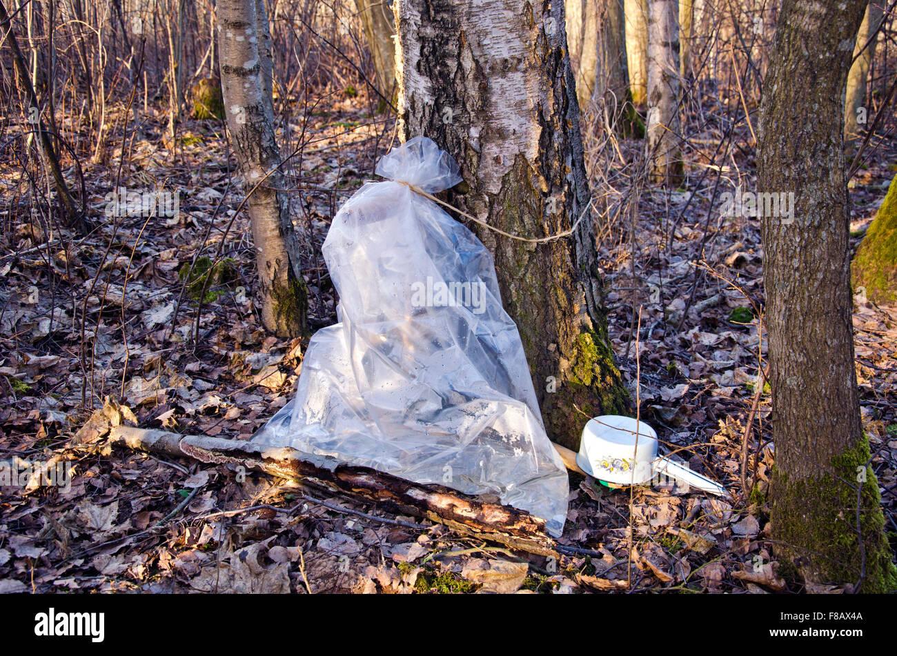 El Abedul Bolsa Una Colección De Plástico Tiempo Primavera Sap En W29IEDHY