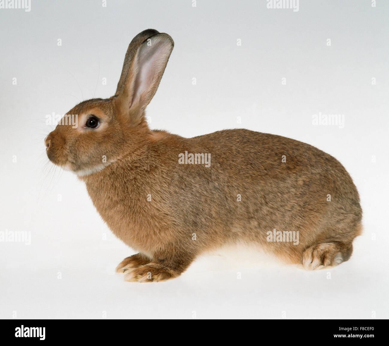 Conejo sobre un fondo neutro Foto de stock