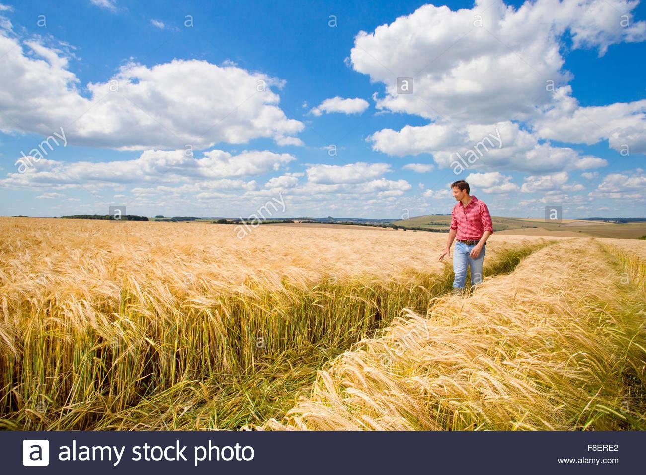 Examinando el agricultor rural soleado campo de cultivo de cebada en verano Imagen De Stock
