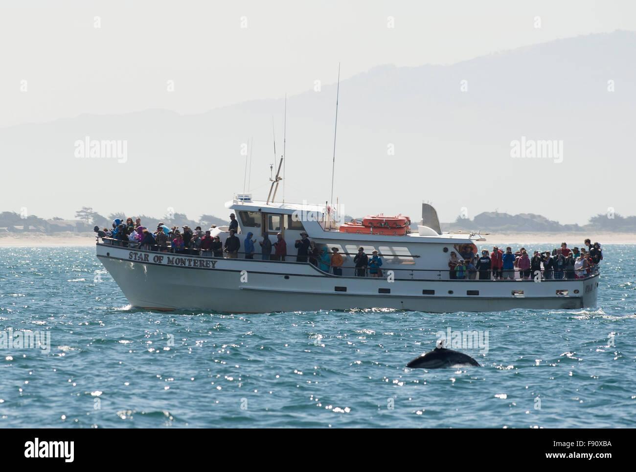 Monterey, ESTADOS UNIDOS. 12 dic, 2015. Los visitantes pueden ver a las ballenas en Monterey, California, Estados Imagen De Stock