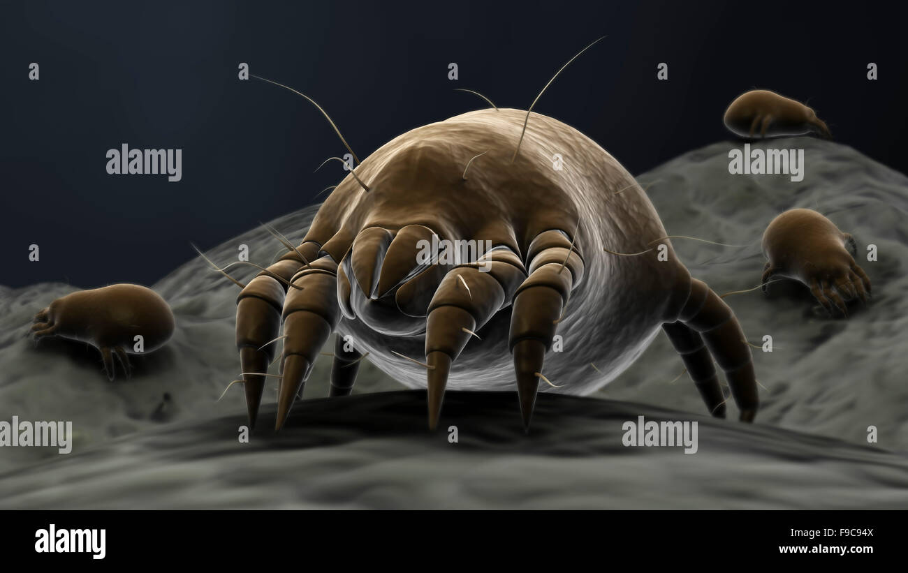 Visualización microscópica de los ácaros del polvo. Foto de stock