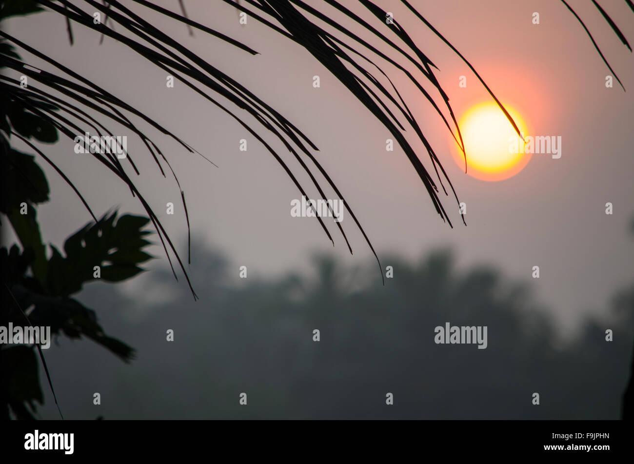 Paisaje en la niebla del amanecer contra un contorno oscuro y hojas de palmeras, un paisaje, al amanecer, un contorno Imagen De Stock